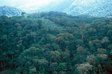 Dense Equatorial Forest near Mounana