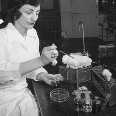 Inoculating an agar plate