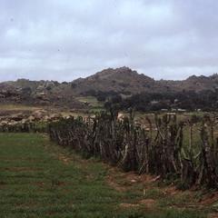 Farming in Jos