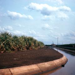 Irrigation of Sugar Cane on Tambakulu