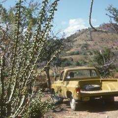 Pereskiopsis cactus, El Tablón