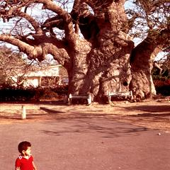 Baobab Tree and Small Child