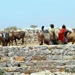 Bull Market in Baydhabo