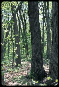 View of a southern forest