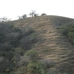 Burned and cut hillside with terraces from overgrazing