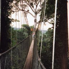 Crossing rope bridge in Kakum National Park