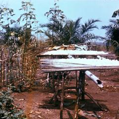 Cassava (Manioc) Drying on Racks