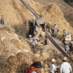 Threshing wheat above Quetzaltenango