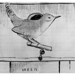 """Wren,"" original drawing of house wren by young AL, ca. 1900"