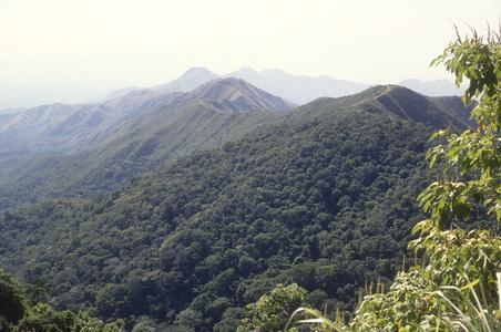 Deciduous forest, Henri Pittier National Park