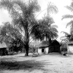 Kuba Courtyard with Raffia Palm