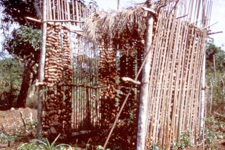 Barn for Drying Yams in Middle Belt of Nigeria