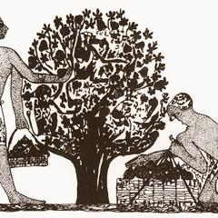 Baboon Fig Pickers
