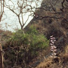 Trees and vegetation