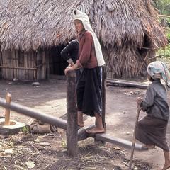 Children thresh rice