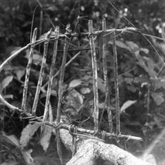 Kuba-Bushong Trap for Squirrels