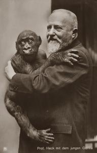 Juvenile Gorilla Print