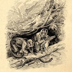 Night Monkey Print