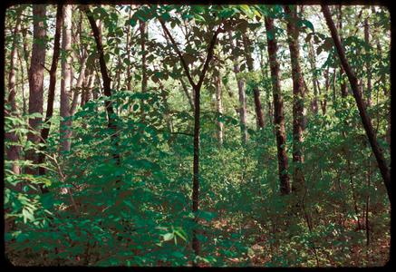 Noe Woods, University of Wisconsin–Madison Arboretum
