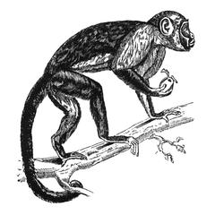 Climbing Squirrel Monkey Print