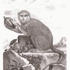 Patas Monkey Print