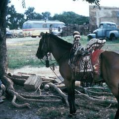 Mossi  Saddle