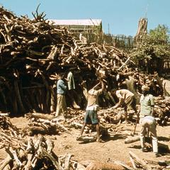 Woodcutters Yard Outside the Walls of Harar