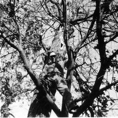Aldo Leopold in treehouse