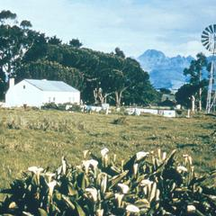 View of  Stellenbosch