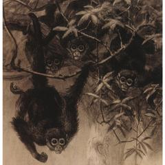 Spider Monkey Group Print