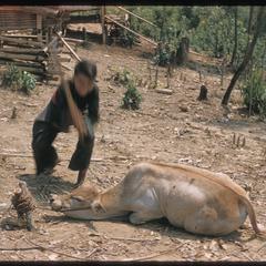 """""""Nyuj Dab"""" (Cow Spirit) ritual, image 09"""