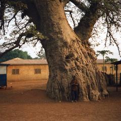 Child under tree