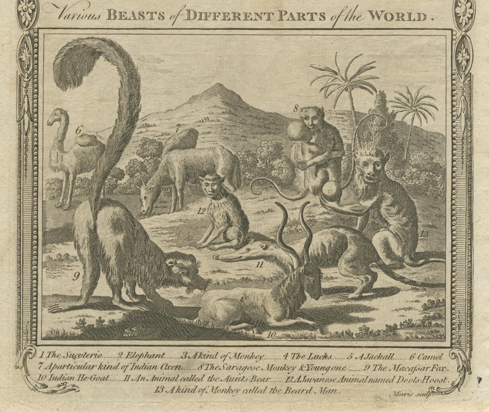 Various Beasts of Different Parts of the World