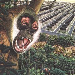 Screaming Squirrel Monkey Print