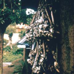 Sacrificial Bones Used for Juju