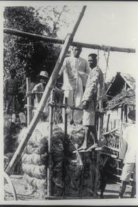 A native hemp press, Albay Province, 1907