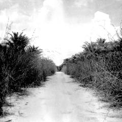 Sandy Rural Road During the Rainy Season