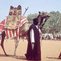 Emir's Camel at Big Sallah Celebration