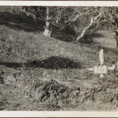 Das grab des Komp.-Kameraden Leibeseder am Vadolui i. Rumän.