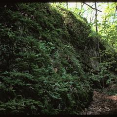 Shaded cliffs, Wyalusing State Park