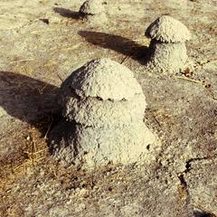 Termite Domes