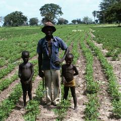 Groundnut (Peanut) Farmer and Sons