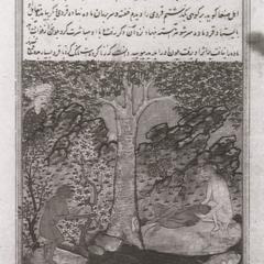 An illustration from Gazwînî, Aja'ib al-makhlûqât