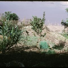 Huayxay : Mekong River bank garden
