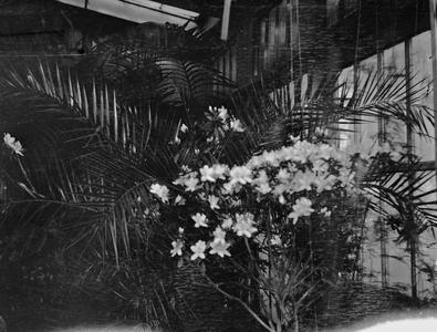 Flowers and plants inside greenhouse at Burlington home