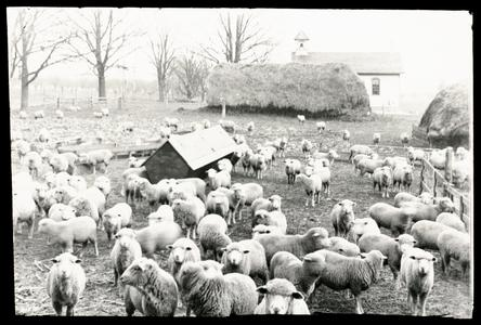 Dexter farm with sheep in yard and Dexter's Corners school house, number 2
