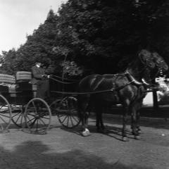 Woman driving horse and buggy