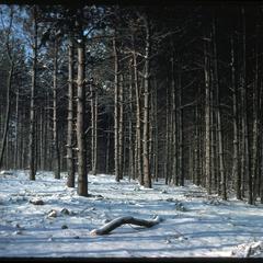 New clearings in the beltline buffer in winter