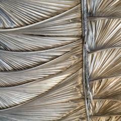 Close-up of side of house built with leaves of a palm (Sabal) species, Sabana Grande