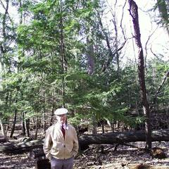 Hemlock with Dr. Ray Evert in Wingra woods